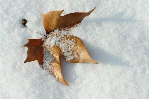 leaf-624094_1280