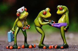 frogs-1672890__340