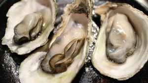 oyster-989182__340