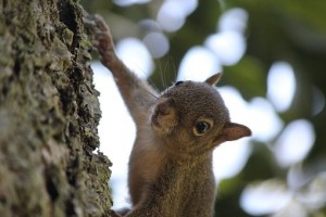 squirrel-3009175__340