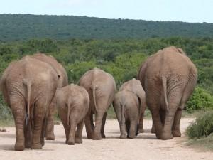 elephant-334456__340
