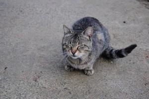 cat-3440575__340