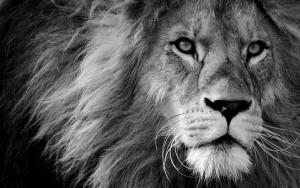 lion-3260558__340