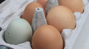 eggs-1406309__340