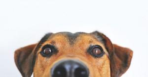 dog-838281__340