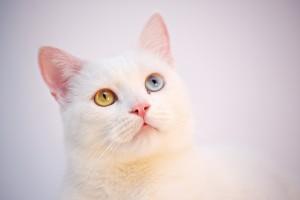 cat-3593021_1920